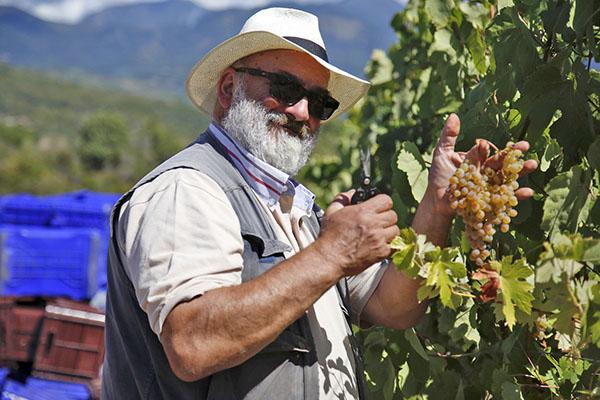 Albamarina Probierset: Rotwein, Weißwein, Rosé