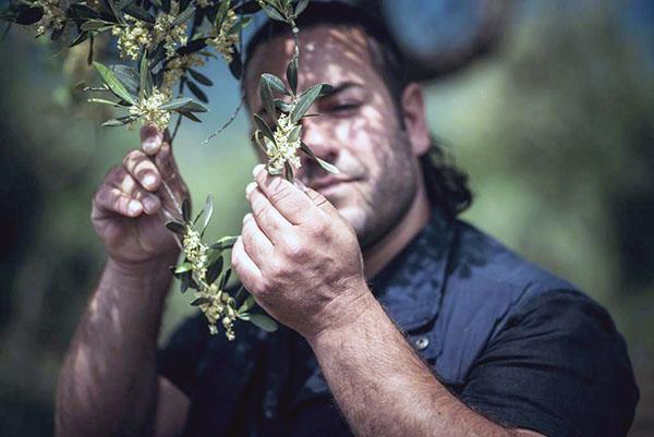 """0,5 l Bio-Olivenöl """"Impronta"""" - Marco Rizzo"""